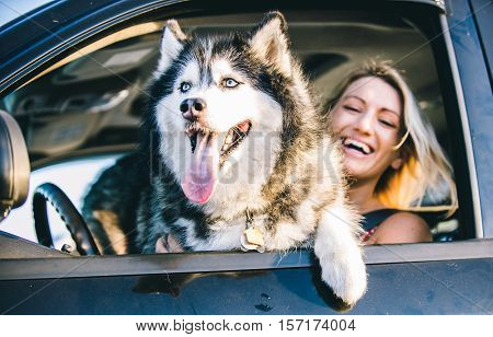 Husky dog and smiling happy woman portrait in the car