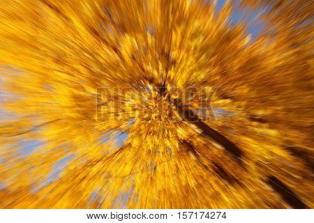 beautiful autumn tree captured in motion on Zuma