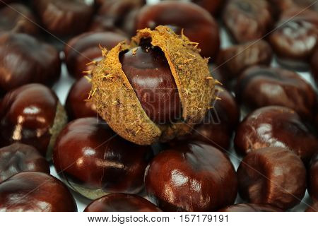Chestnut / The fruits of the chestnut