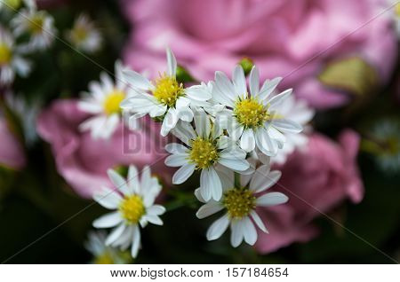 White cutter flowers used in bouquet as supplementary.