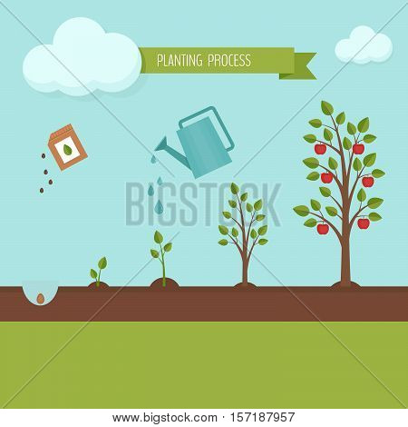 Planting tree process infographic. Apple tree growth stages. Steps of plant growth. Flat design vector illustration.