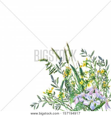 Colorful spring flowers and grass on a meadow. Watercolor hand painting illustration on isolate white background.