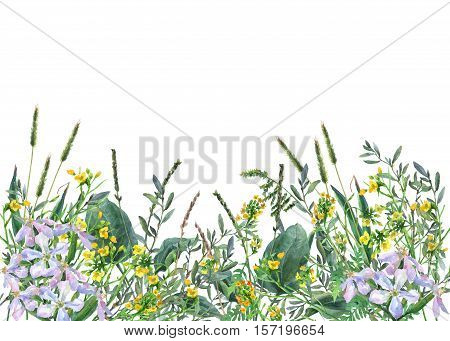 Panoramic view of wild meadow flowers and grass on white background. Horizontal border with flowers and herbs. Watercolor hand painting illustration.