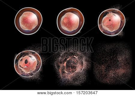 Cell lysis. Destruction of a cell. 3D illustration that can be used to illustrate effect of drugs, microbes, nanoparticles, toxic substances or apoptosis