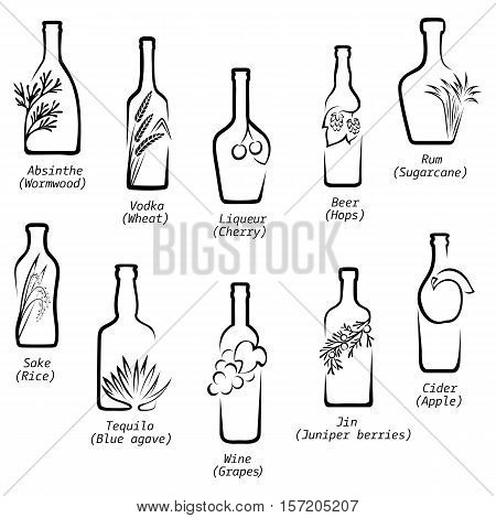 Conceptual icons of alcoholic beverages with the image of raw material from that they are produced with the names