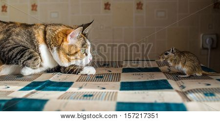 Cat playing with little gerbil mouse on the table with serving cutlery. Concepts of prey, food, pest.