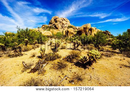 Desert Landscape with Cholla and Saguaro Cacti and Desert Shrubs at the Boulders in the desert near Carefree Arizona, United States of America