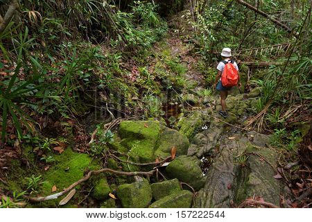 Woman trekking in the deep Borneo jungle of the Bako National park, Malaysia