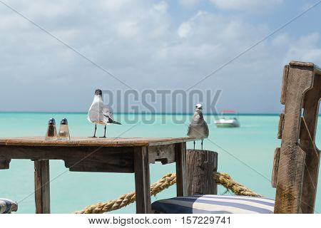 On Pelican Pier an amazing lookout to the sea and view for a meal in Aruba in the Dutch Antilles. The birds are ready for a meal