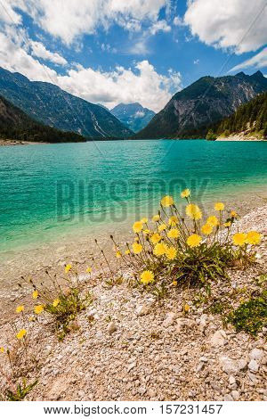 Vertical View Of Lake Plansee With Dandelions In Front