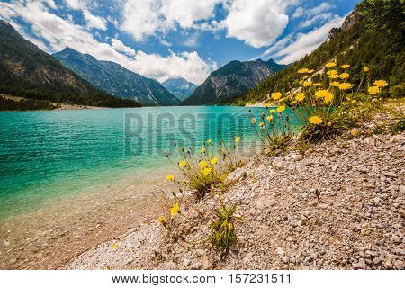 Wide View Of Lake Plansee With Dandelions In Front