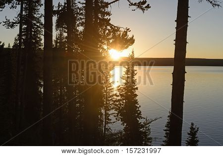 Sunset Through the Trees on Shoshone Lake in Yellowstone National Park in Wyoming