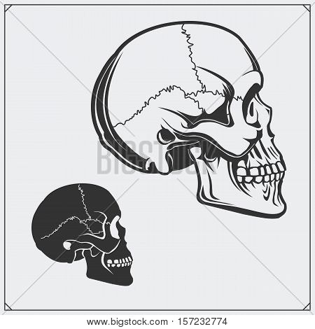 Vector illustration of skulls isolated on gray background.