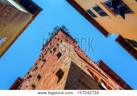 Torre Guinigi In Lucca, Tuscany, Central Italy