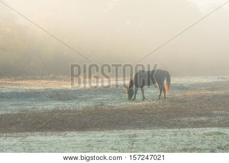Horse nibbling grass at sunrise in a heavy fog in late autumn