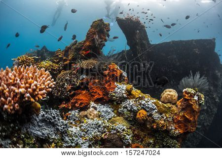 Underwater shoot of a shipwreck USAT Liberty with corals and fishes. Tulamben, Bali