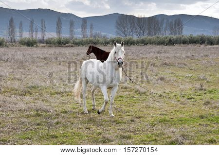 Horses in a rural landscape in Ciudad Real Procince Spain
