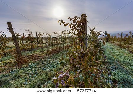 Frosty day in apple orchard. Moravian landscape Lysice.