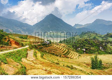 Terraced Rice Fields Among The Hoang Lien Mountains, Vietnam