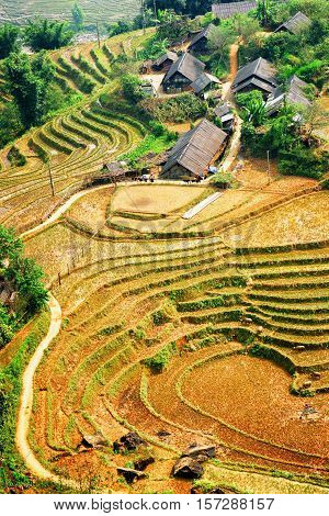 Village Houses And Rice Terraces Among Green Trees. Vietnam
