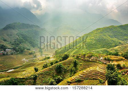Sunlit Green Rice Terraces At Highlands Of Sa Pa, Vietnam
