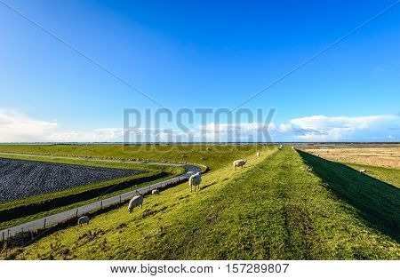 Curved dike in a Dutch landscape with some sheep on a sunny day with a bright blue sky in the end of the winter season.