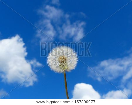 The dandelion looks nice between the clouds.