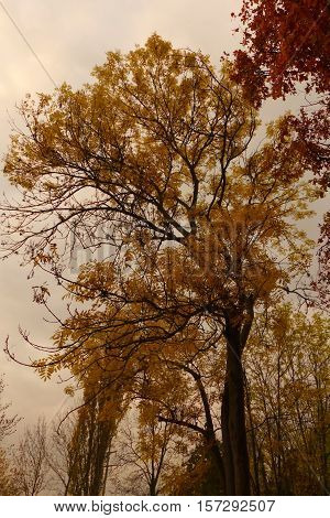 It is autumn. The weather is bad, but the trees are looking interesting.