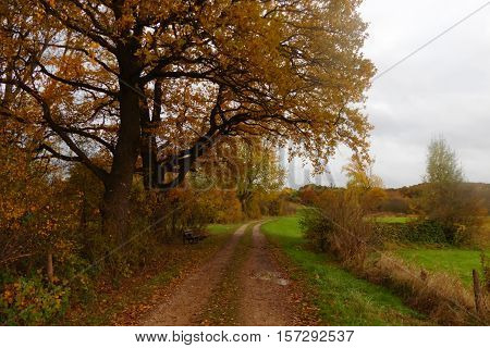 nice pathway with his different colors in autumn