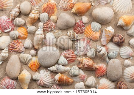 Beautiful mixture of white stones and seashells on sand. View from above