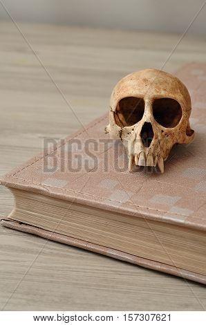 Vervet monkey skull on top of an old book