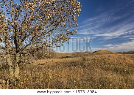 A rolling hills landscape in late autumn.