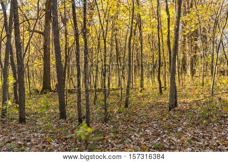 A view of a forest during autumn.
