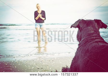 Giant Black Schnauzer is lying on the sandy beach. Its owner is standing with in front of him in the sea. Edited as a vintage photo with dark edges.