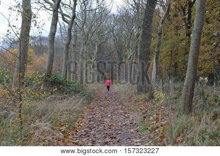 Walker on a treil thru the forest in autum