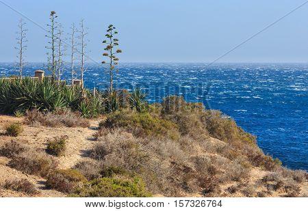 Agave Plant On Coast.