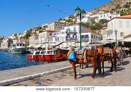 Mules Waiting for Tourists at the Port of Hydra Island in Greece