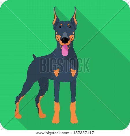 Vector serious dog Doberman Pinscher body icon flat design