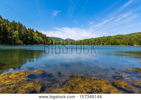 A pond at Acadia National Park Maine