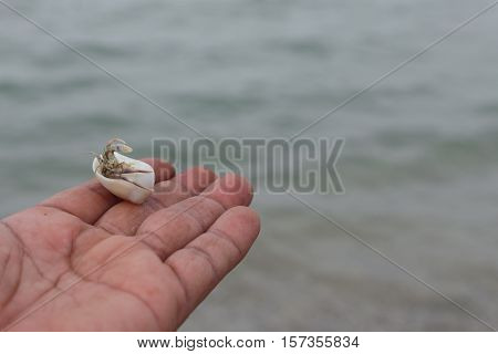 hermit crab Select focus (Diogenes pagurian soldier crab) on hand