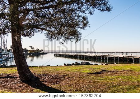 Tree and fishing pier at Chula Vista Bayfront park with San Diego bay.