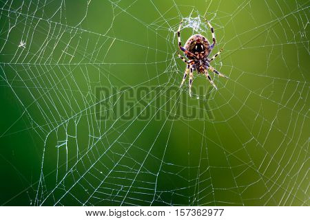 Western Spotted Orb Weaver - (Neoscona oaxacensis) Spider in center of web