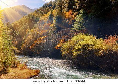 Beautiful Mountain River Among Fall Woods. Autumn Landscape