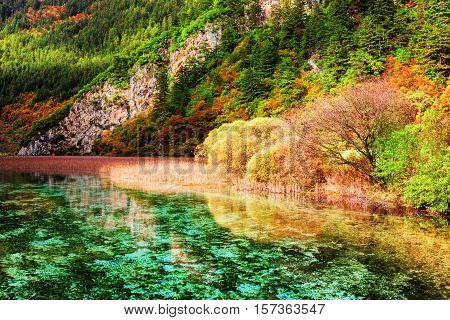 Beautiful View Of Amazing River With Crystal Clear Water