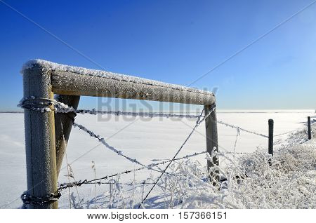 An image of a frost covered barbwire fence.