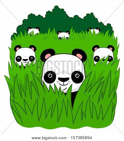 Six pandas are hiding in the grass. Vector illustration.