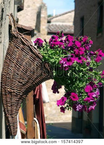 Bouquet of purple petunias in a horn shaped basket on a wall in Pienza Italy