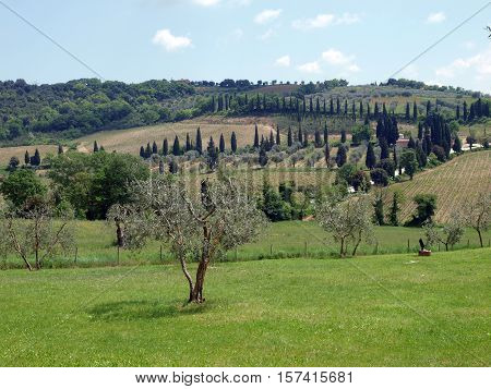 The hills surrounding Abbey of Sant'Antimo in Tuscany. Italy