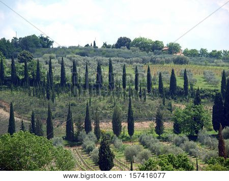 Tuscan landscape with vineyards and cypresses. Italy