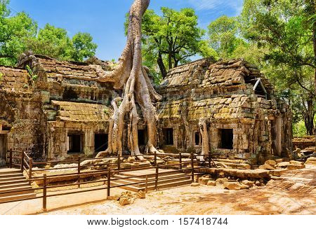 Amazing Ta Prohm Temple Overgrown With Trees In Angkor, Cambodia